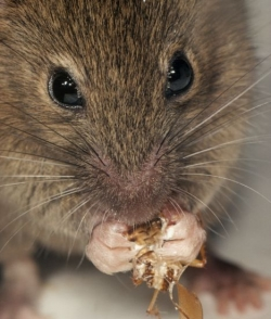 Clearwater Rodent Control